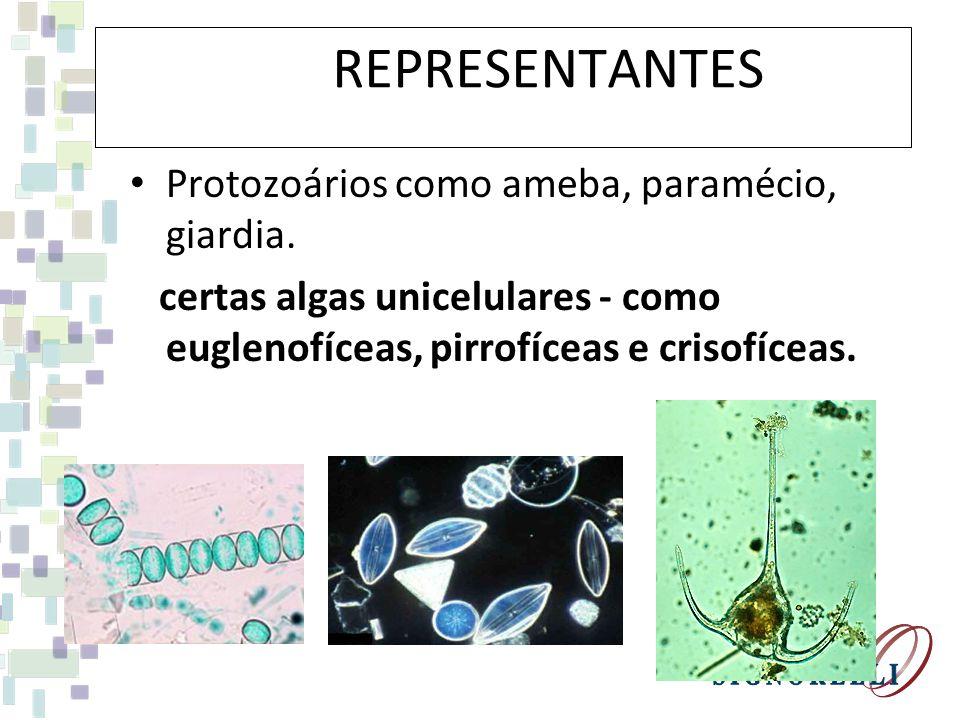 REPREPRESENTANTES Protozoários como ameba, paramécio, giardia.
