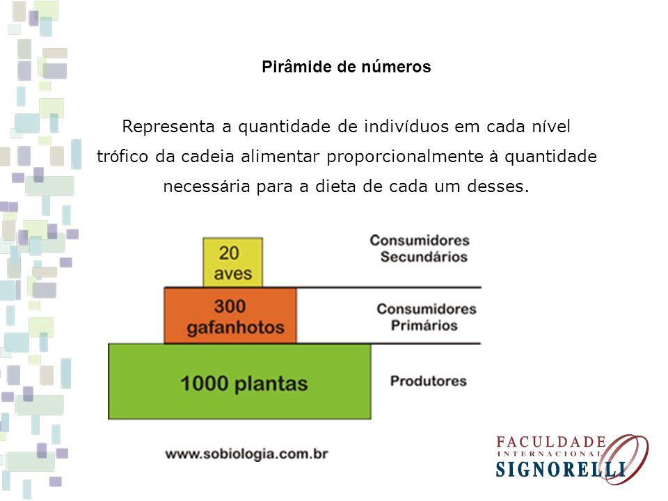 Pirâmide de números Representa a quantidade de indivíduos em cada nível trófico da cadeia alimentar proporcionalmente à quantidade necessária para a dieta de cada um desses.