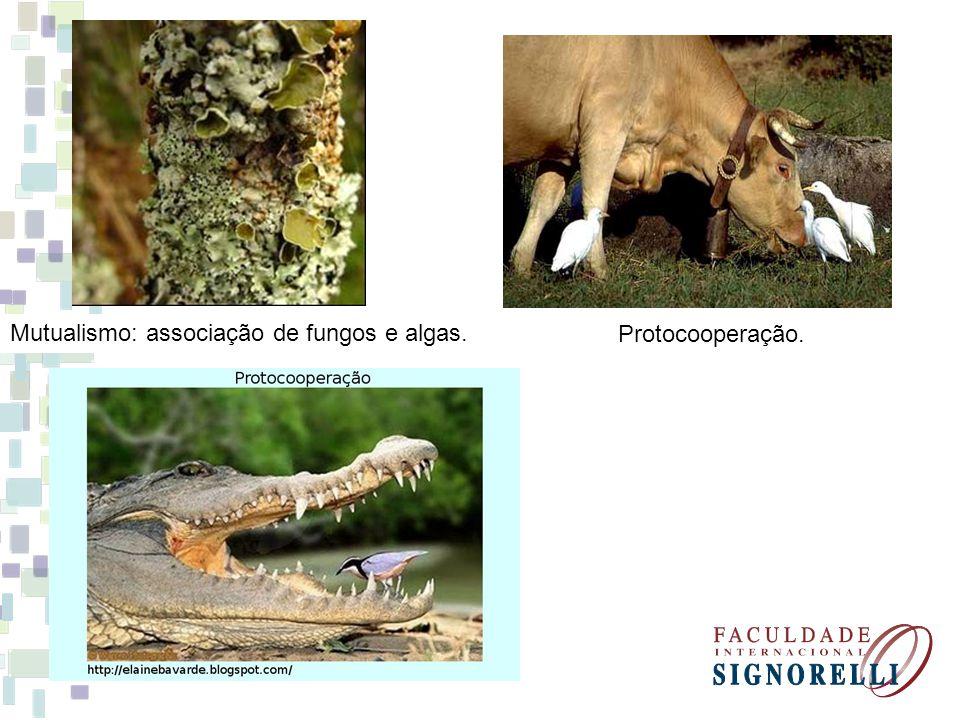 Mutualismo: associação de fungos e algas.