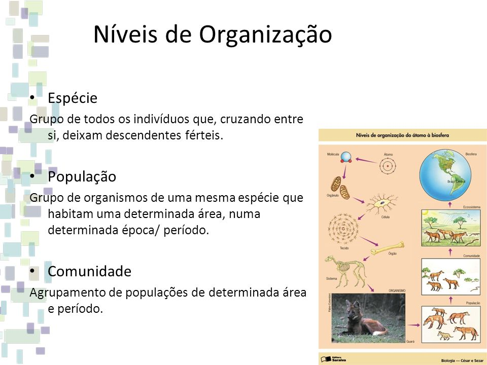 Níveis de Organização Espécie População Comunidade