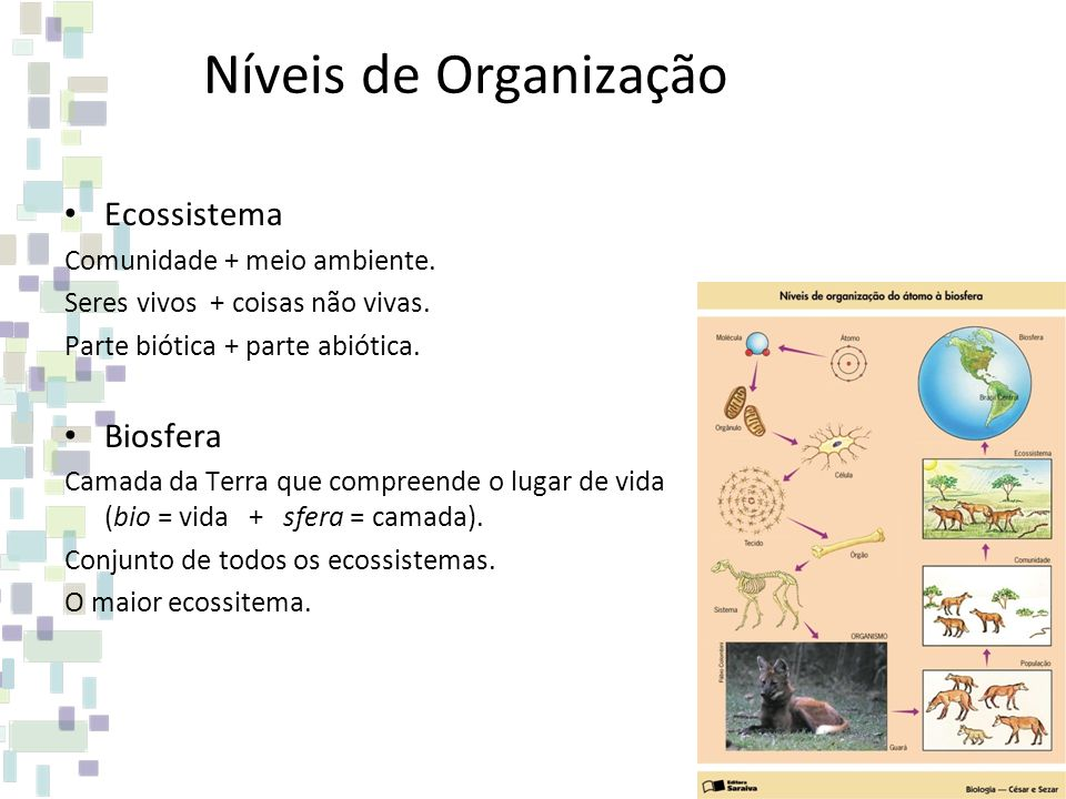Níveis de Organização Ecossistema Biosfera Comunidade + meio ambiente.