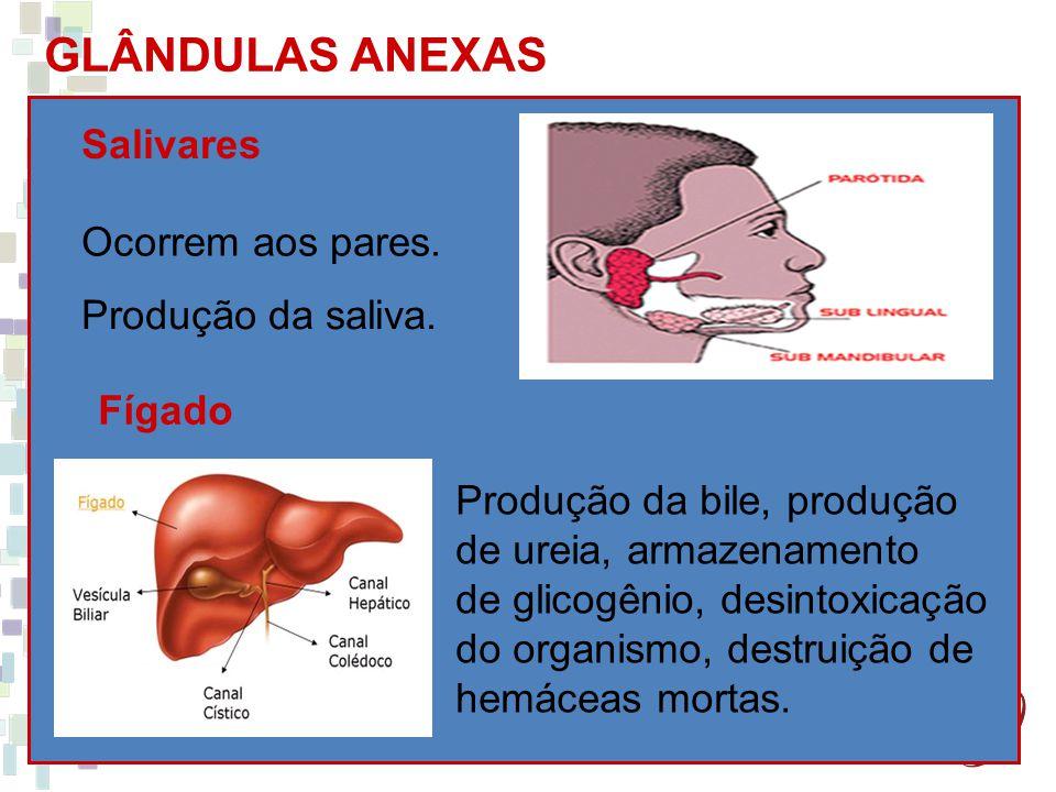 GLÂNDULAS ANEXAS Salivares Ocorrem aos pares. Produção da saliva.