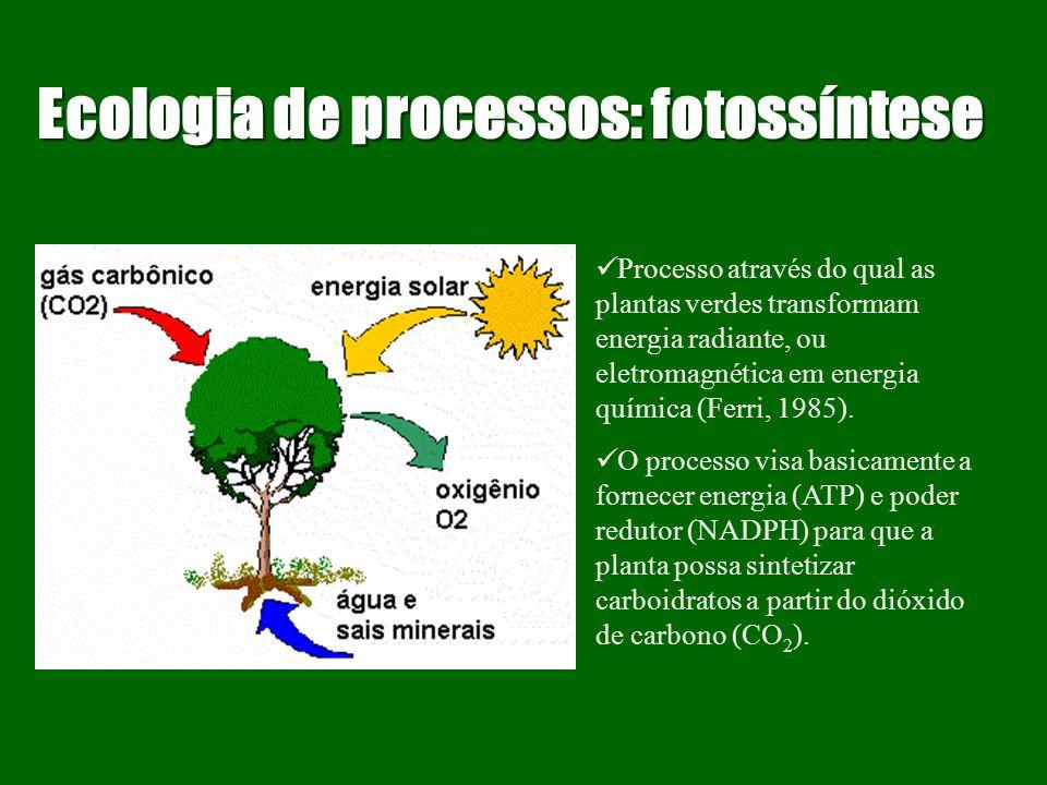 Ecologia de processos: fotossíntese