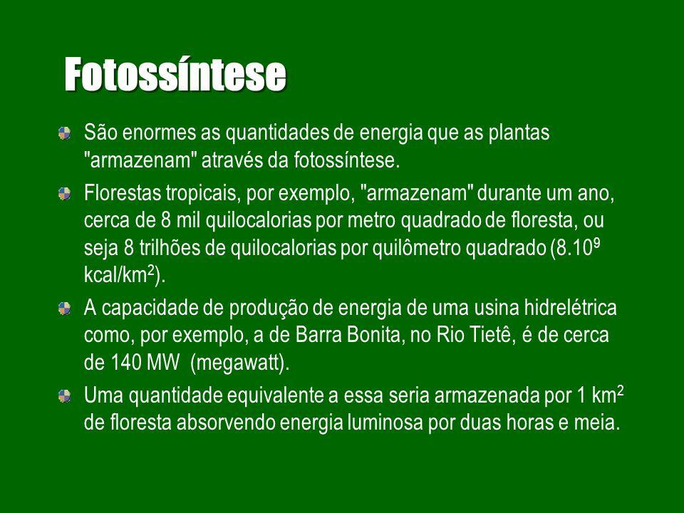 Fotossíntese São enormes as quantidades de energia que as plantas armazenam através da fotossíntese.