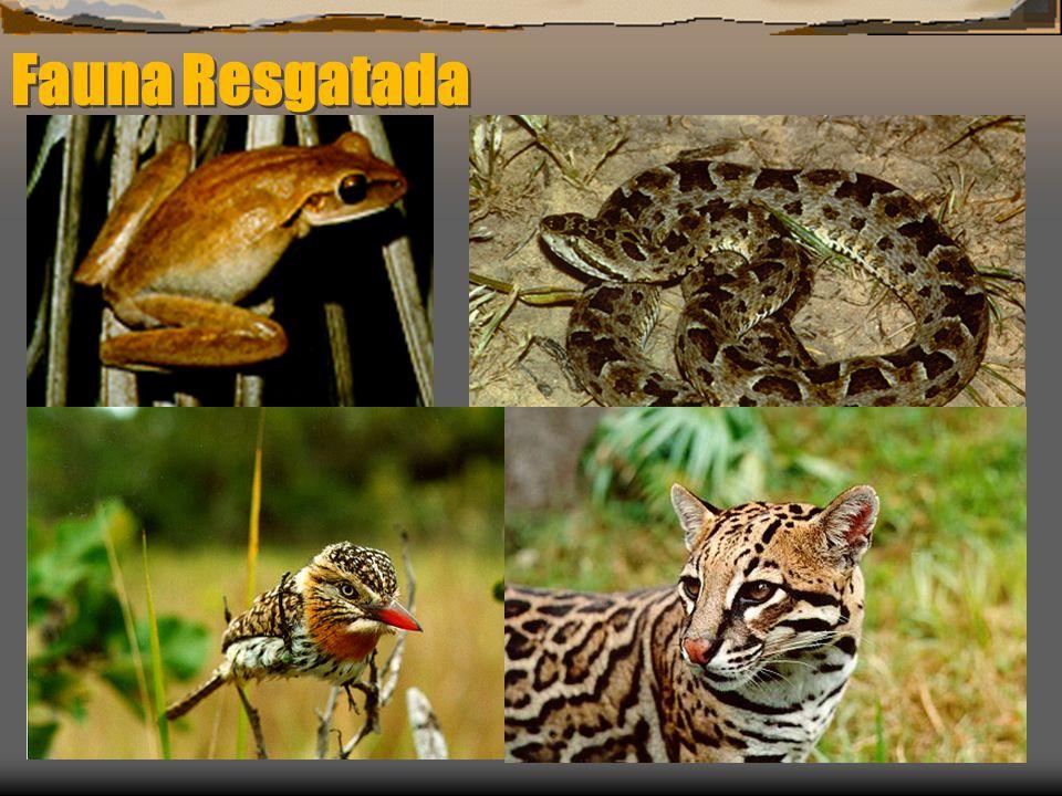 Fauna Resgatada