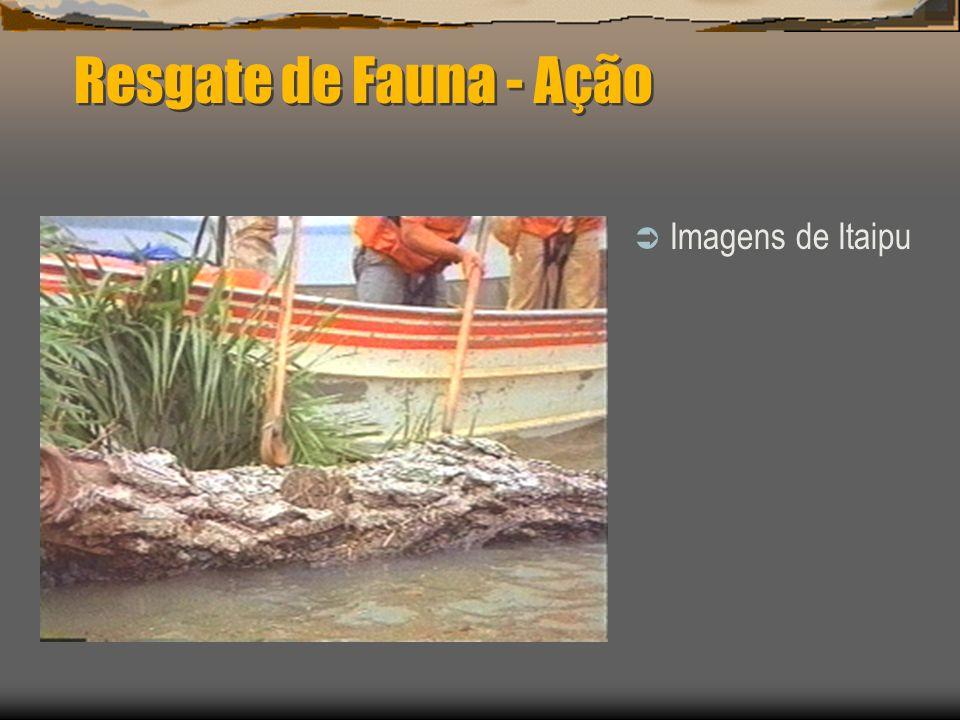 Resgate de Fauna - Ação Imagens de Itaipu