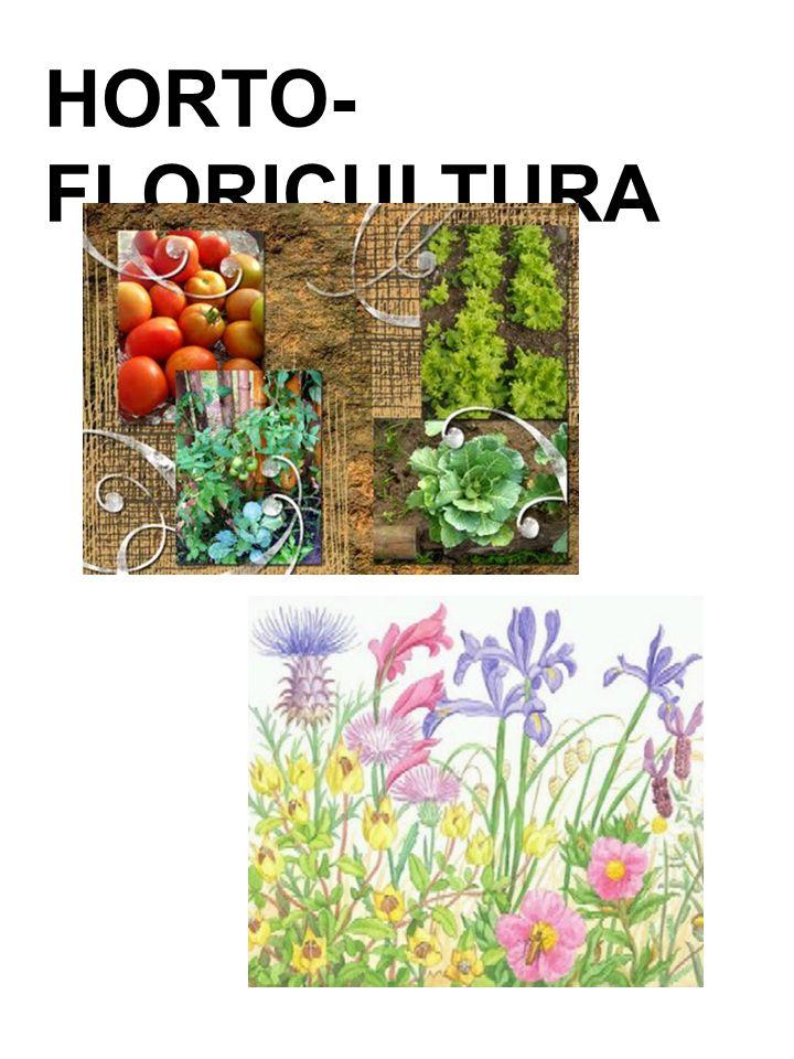 HORTO-FLORICULTURA