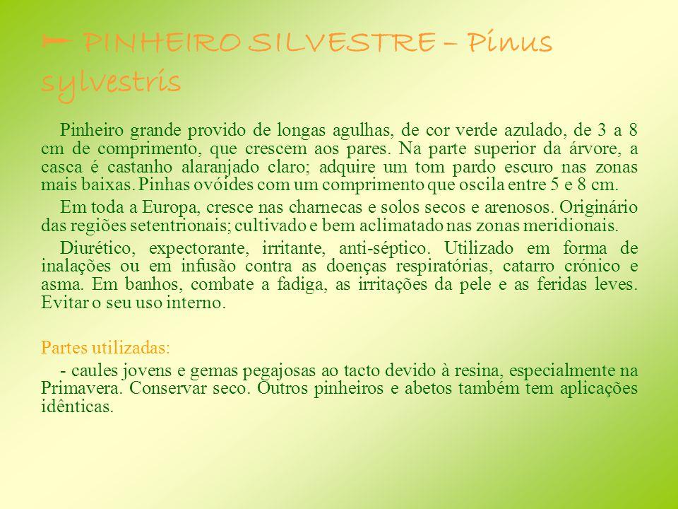  PINHEIRO SILVESTRE – Pinus sylvestris