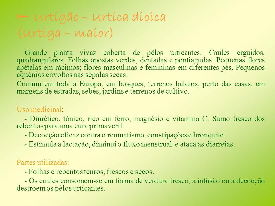 Urtigão – Urtica dioica (Urtiga – maior)