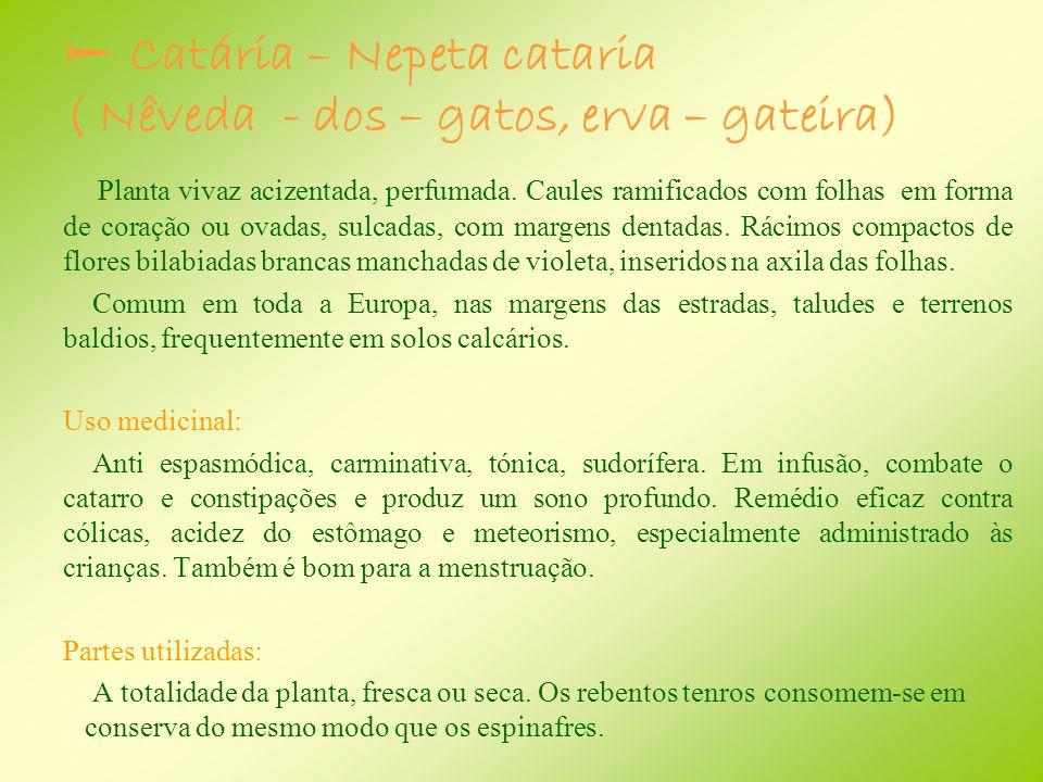  Catária – Nepeta cataria ( Nêveda - dos – gatos, erva – gateira)