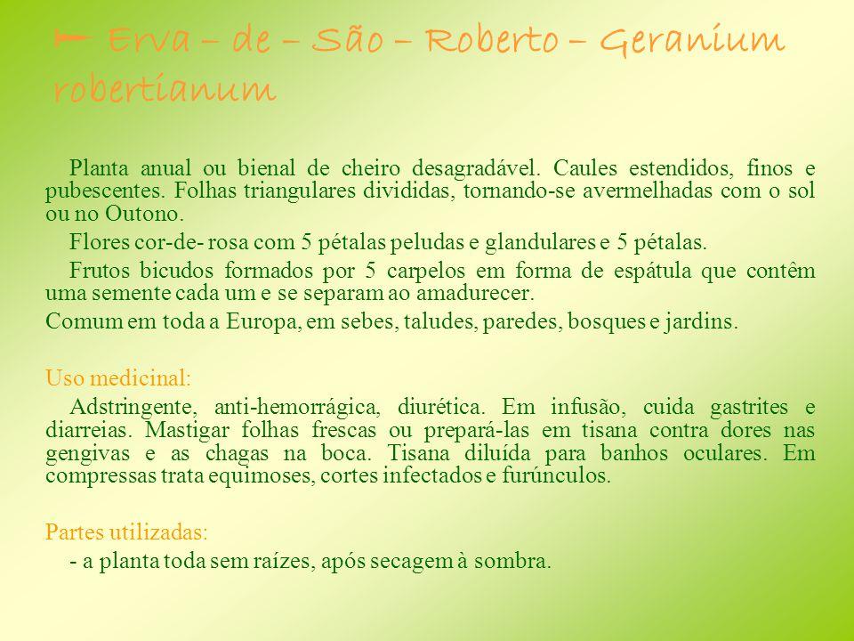  Erva – de – São – Roberto – Geranium robertianum