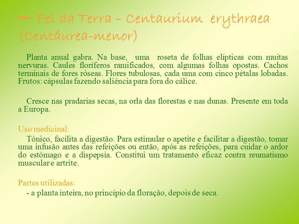  Fel da Terra – Centaurium erythraea (Centáurea-menor)