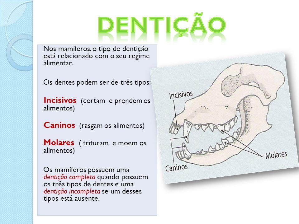 Dentição Incisivos (cortam e prendem os alimentos)