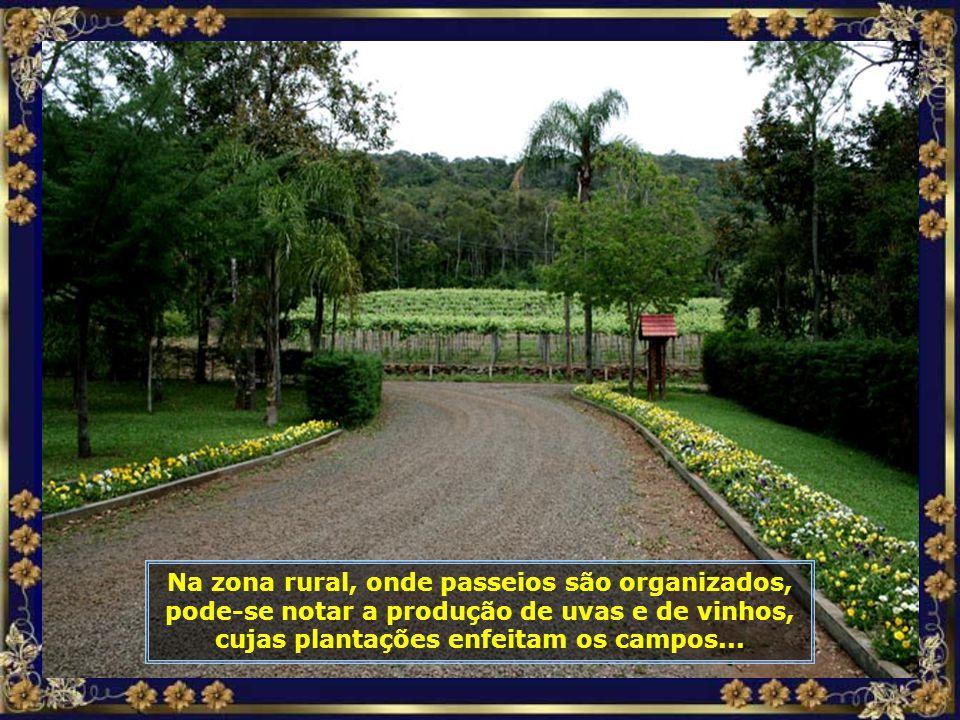 IMG_6491 - TREZE TÍLIAS - PARREIRAIS DE UVAS-700