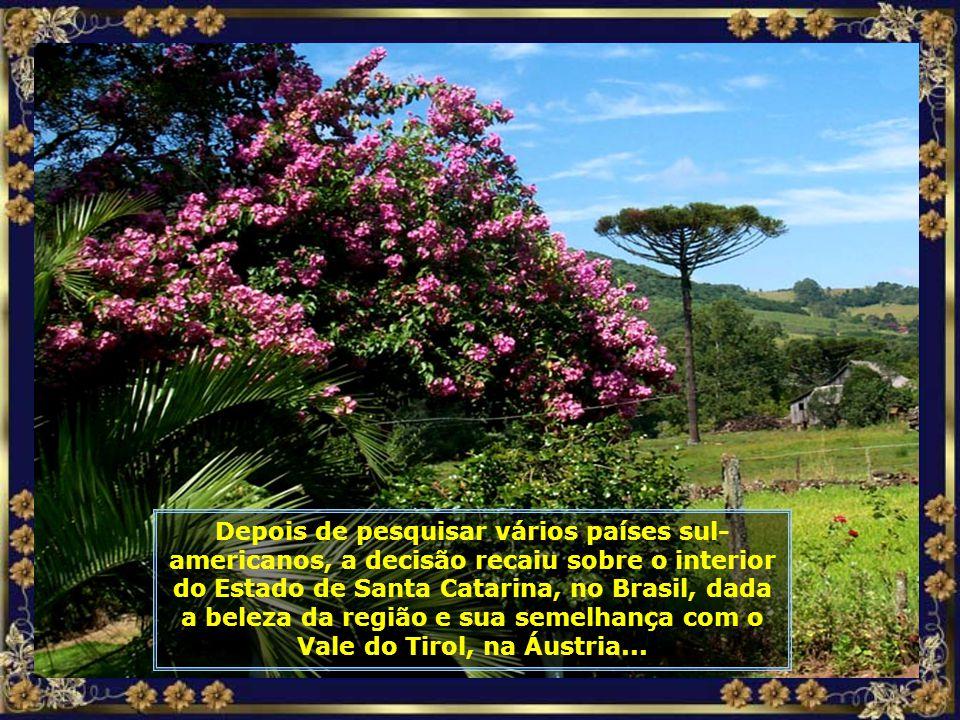 P0000622 - ARAUCÁRIA EM 13 TILIAS - CORTADA-700.jpg