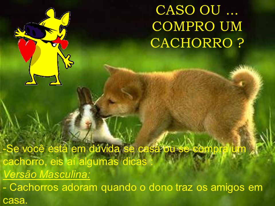 CASO OU ... COMPRO UM CACHORRO
