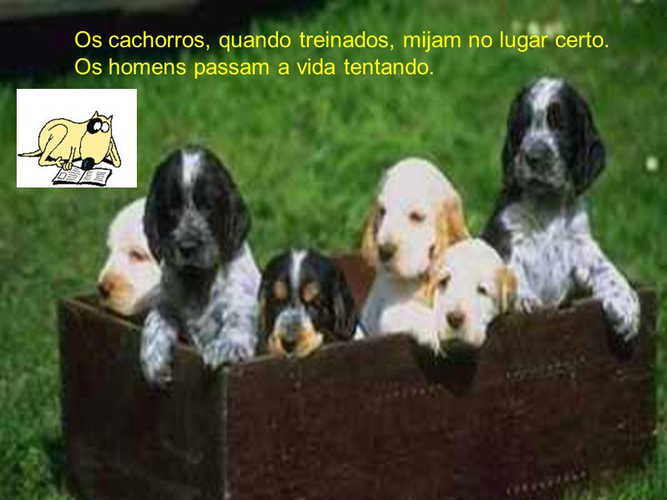 Os cachorros, quando treinados, mijam no lugar certo