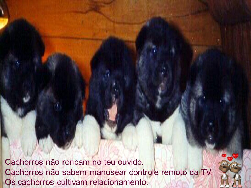 Cachorros não roncam no teu ouvido
