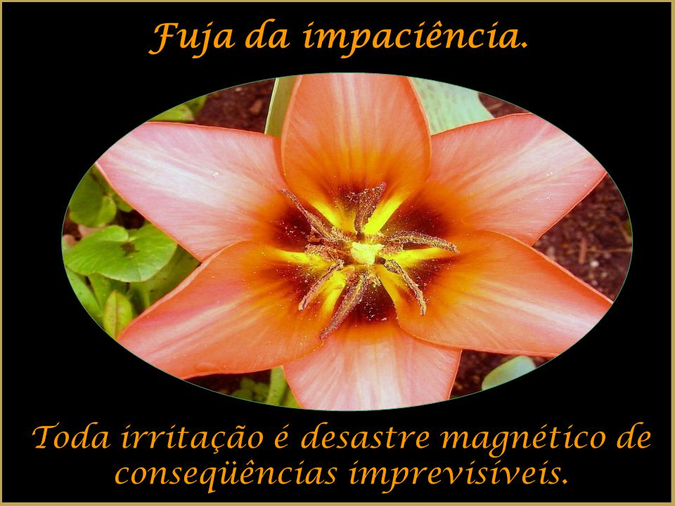 Toda irritação é desastre magnético de conseqüências imprevisíveis.