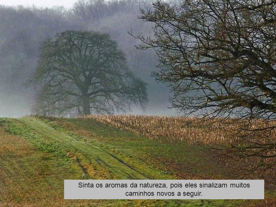 Sinta os aromas da natureza, pois eles sinalizam muitos caminhos novos a seguir.