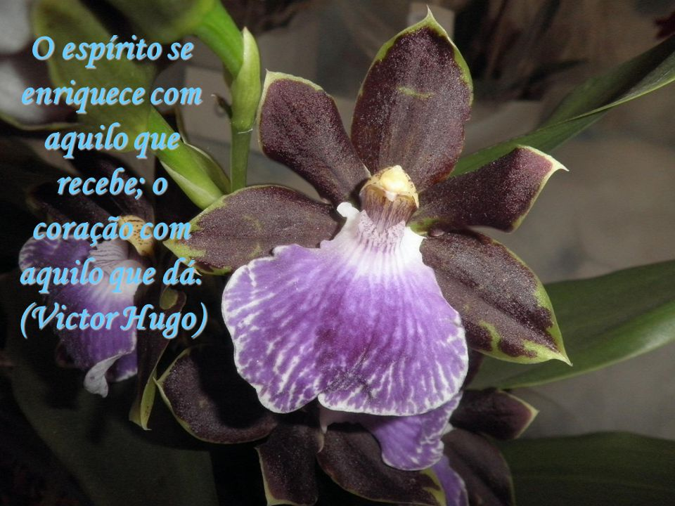 O espírito se enriquece com aquilo que recebe; o coração com aquilo que dá. (Victor Hugo)