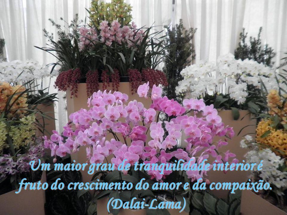 Um maior grau de tranquilidade interior é fruto do crescimento do amor e da compaixão. (Dalai-Lama)