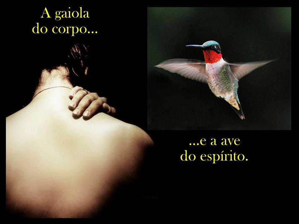 A gaiola do corpo... ...e a ave do espírito.