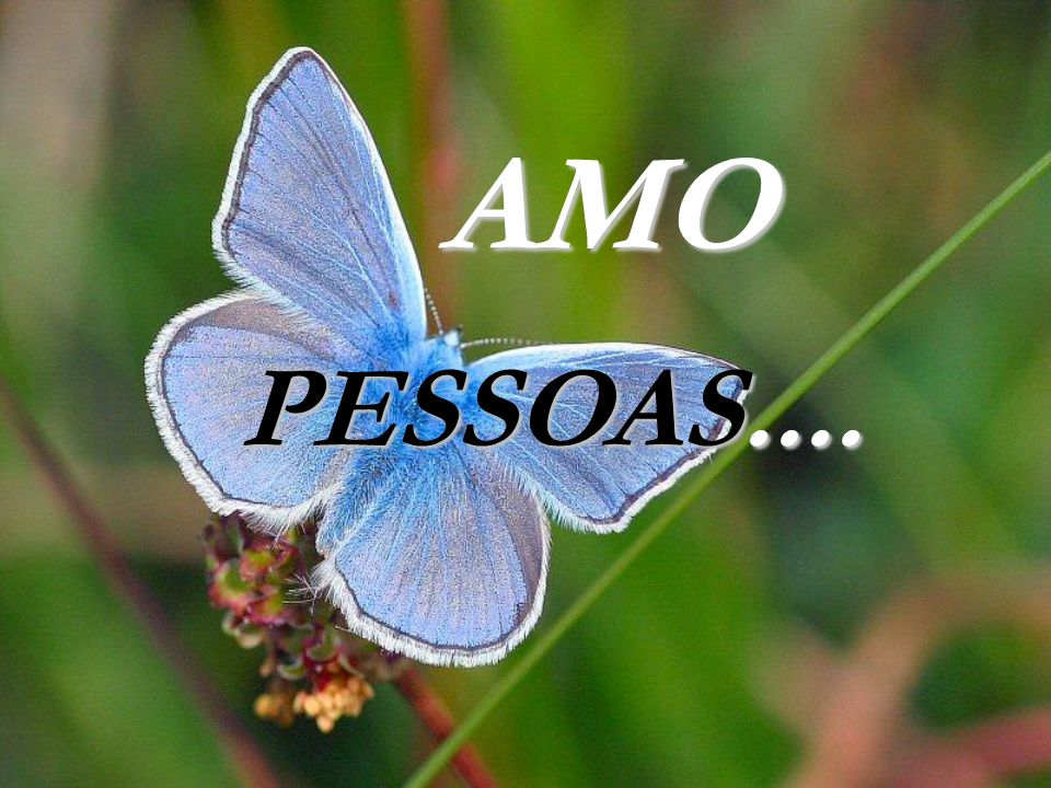 AMO PESSOAS....