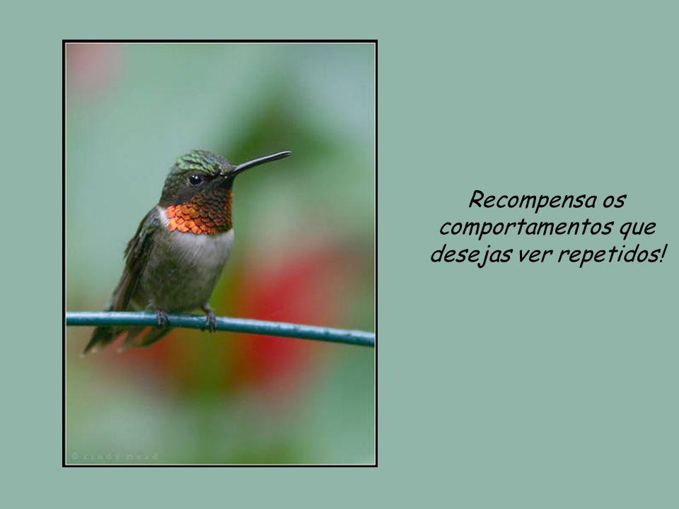 Recompensa os comportamentos que desejas ver repetidos!