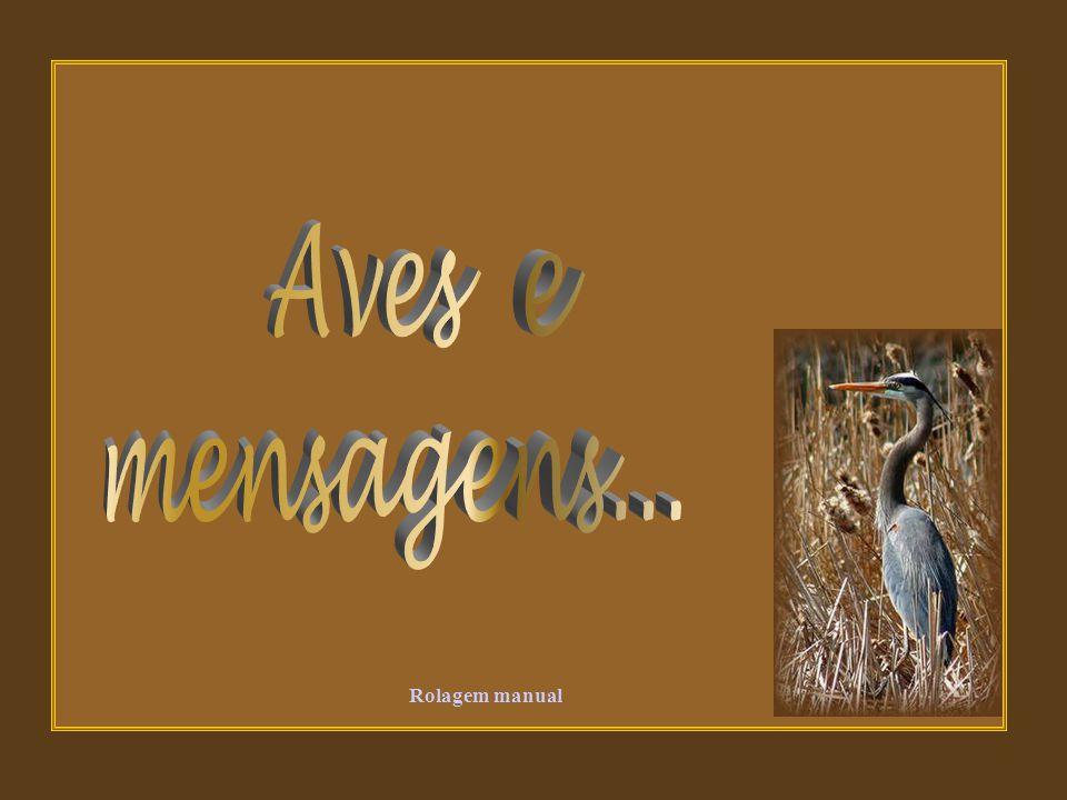 Aves e mensagens... Rolagem manual