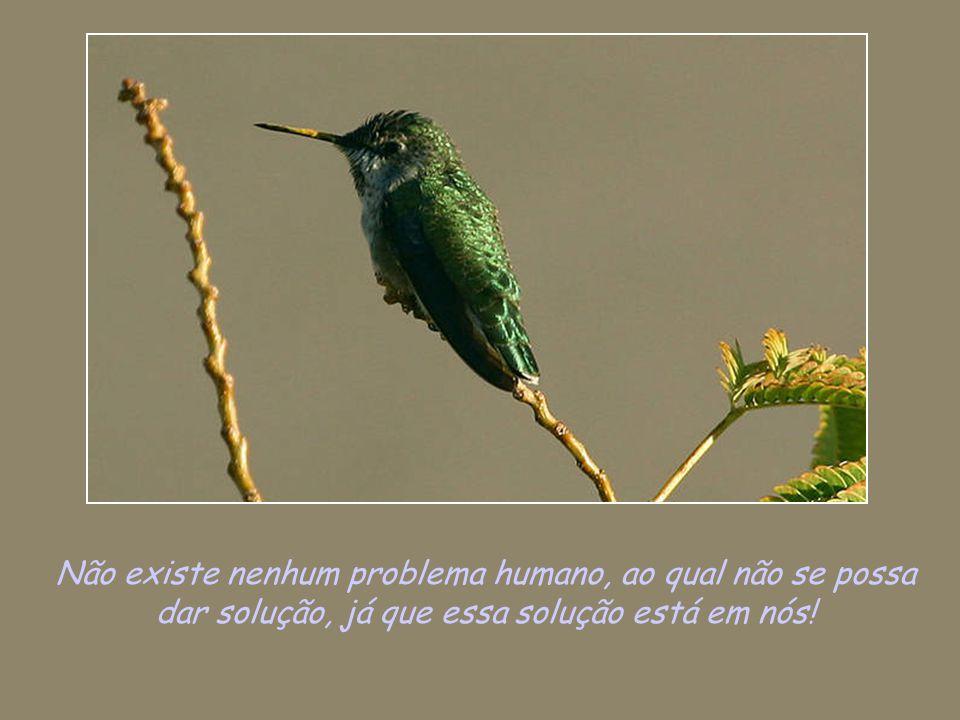 Não existe nenhum problema humano, ao qual não se possa dar solução, já que essa solução está em nós!
