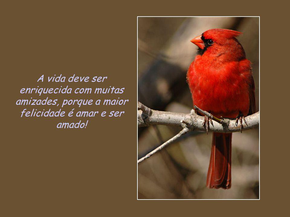 A vida deve ser enriquecida com muitas amizades, porque a maior felicidade é amar e ser amado!