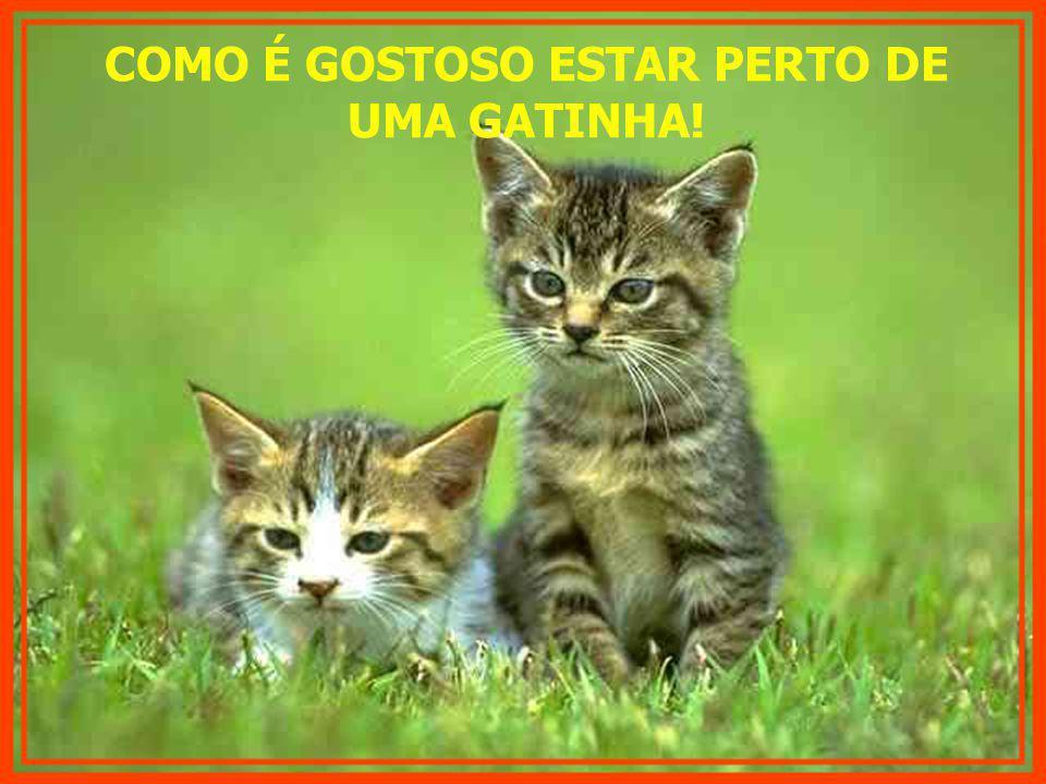 COMO É GOSTOSO ESTAR PERTO DE UMA GATINHA!