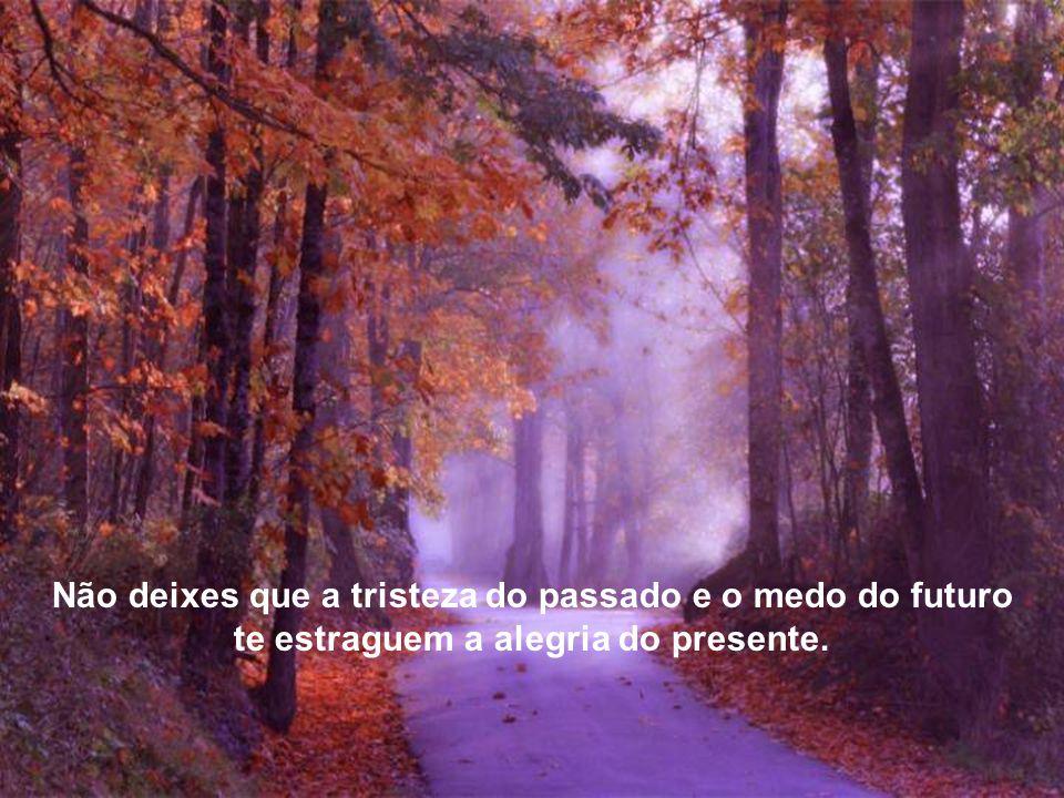 Não deixes que a tristeza do passado e o medo do futuro te estraguem a alegria do presente.