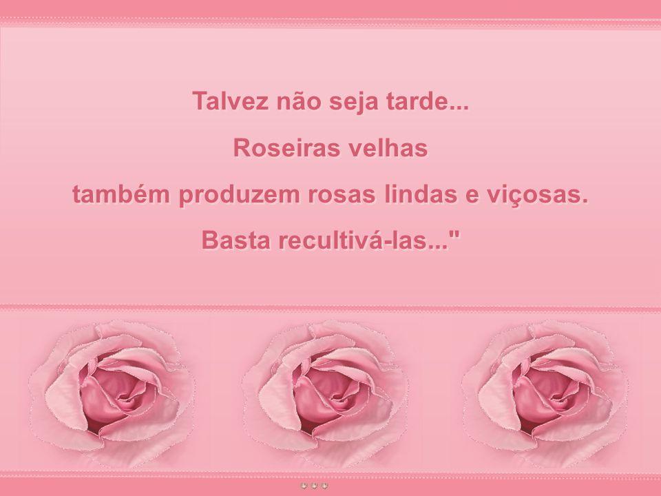 também produzem rosas lindas e viçosas.