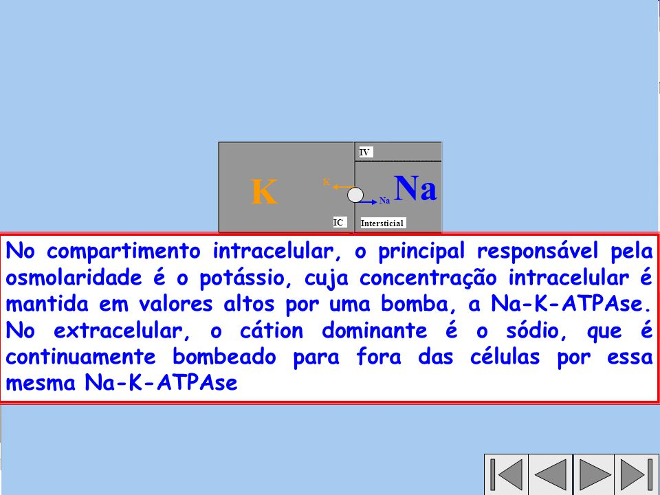 IV K. Na. K. Na. IC. Intersticial.