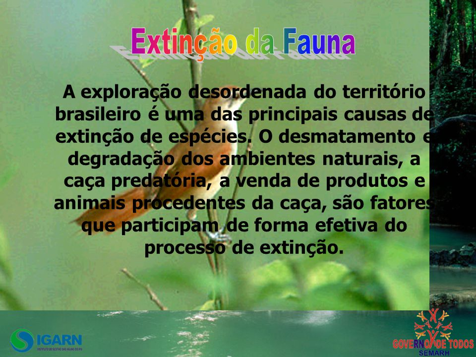 Extinção da Fauna