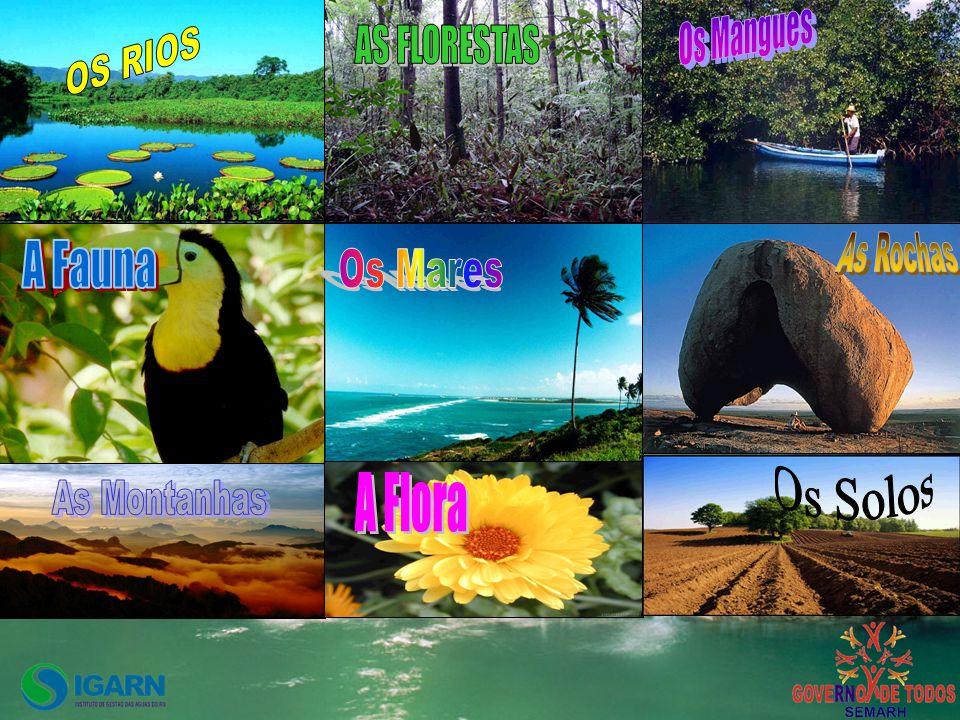 Os Mangues OS RIOS AS FLORESTAS As Rochas A Fauna Os Mares Os Solos A Flora As Montanhas