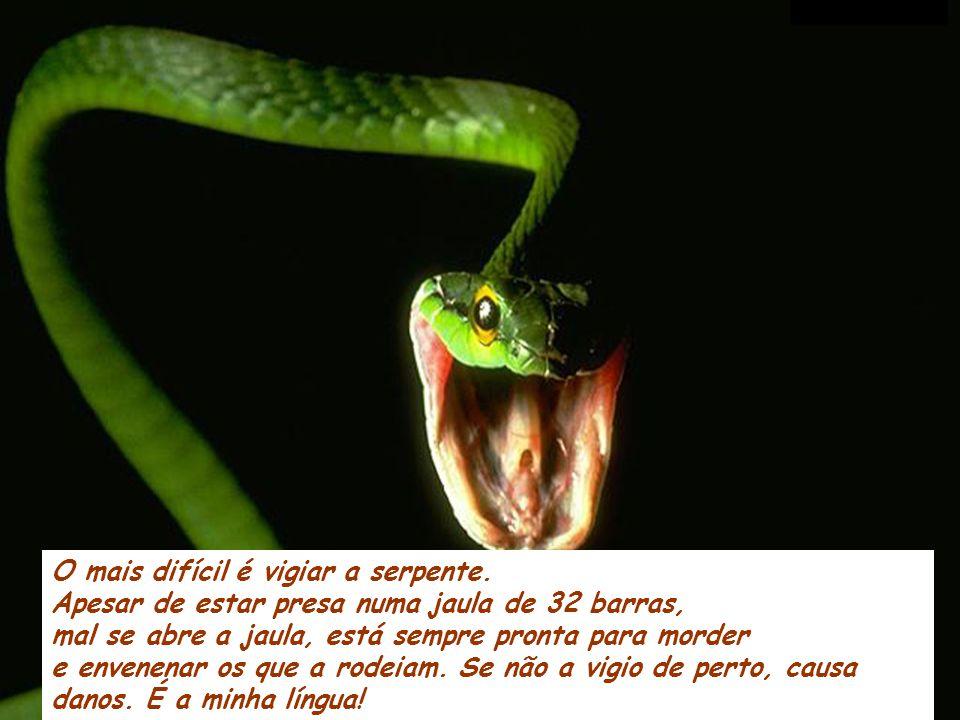 O mais difícil é vigiar a serpente.
