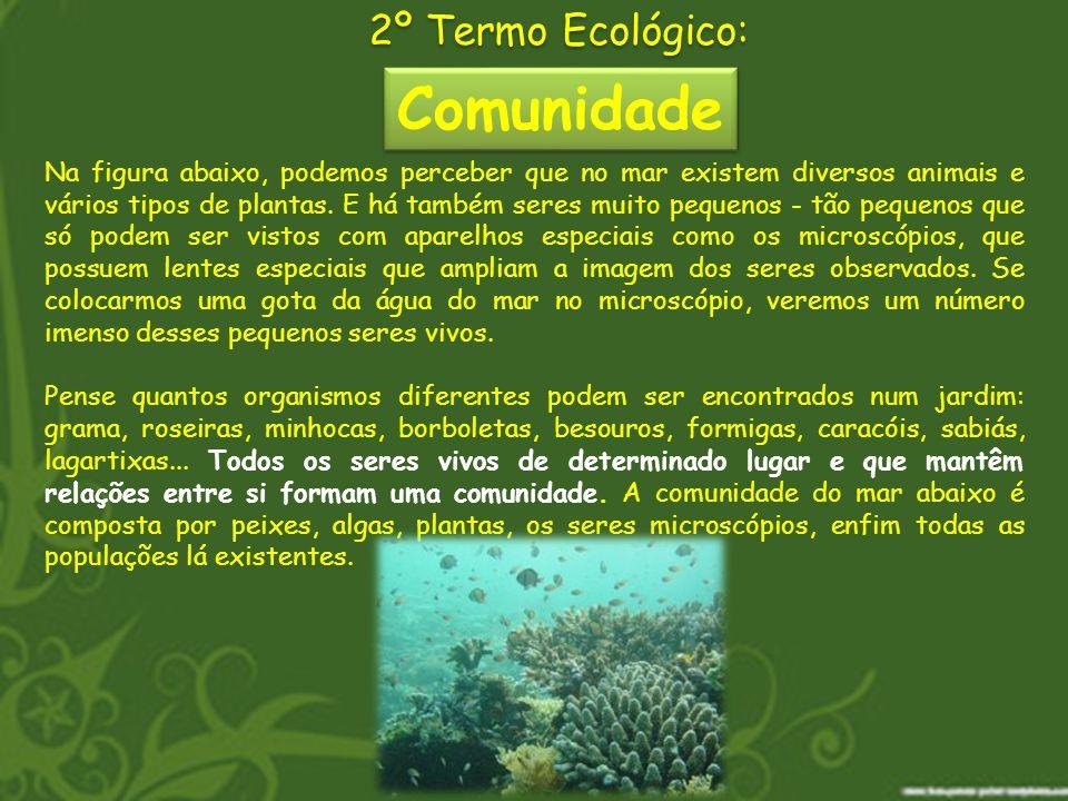 Comunidade 2º Termo Ecológico: