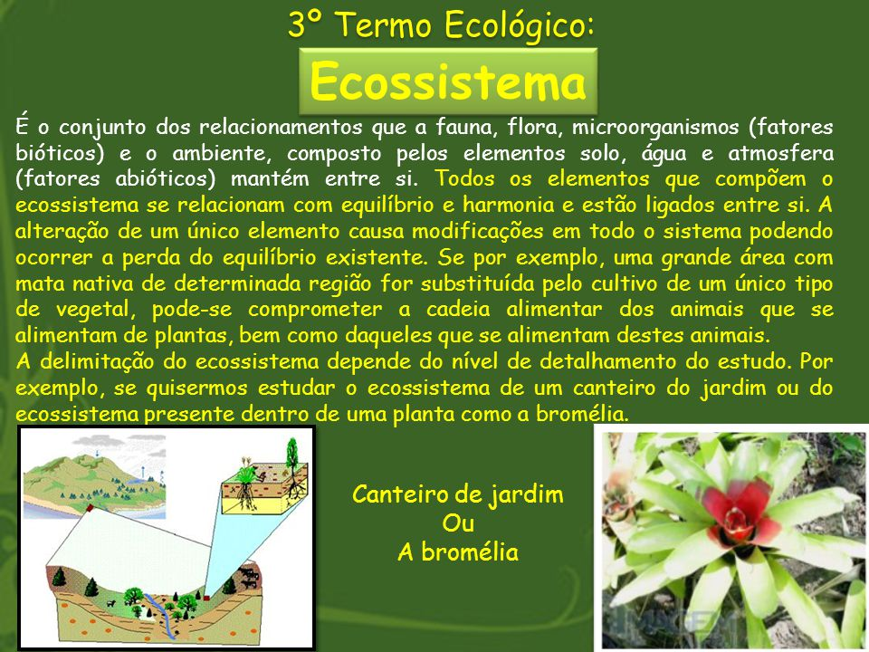 Ecossistema 3º Termo Ecológico: Canteiro de jardim Ou A bromélia