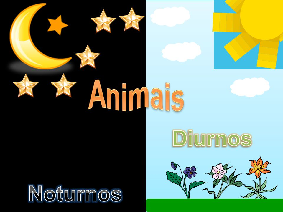 Animais Diurnos Noturnos