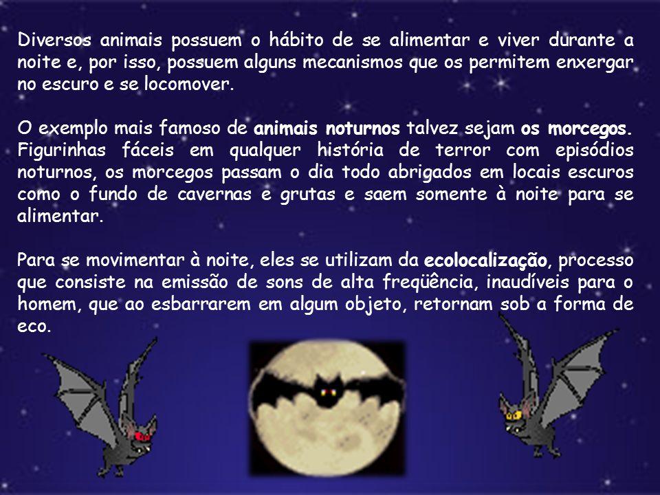 Diversos animais possuem o hábito de se alimentar e viver durante a noite e, por isso, possuem alguns mecanismos que os permitem enxergar no escuro e se locomover.