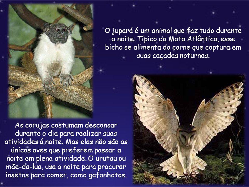 O jupará é um animal que faz tudo durante a noite