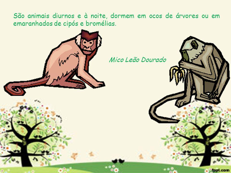 São animais diurnos e à noite, dormem em ocos de árvores ou em emaranhados de cipós e bromélias.
