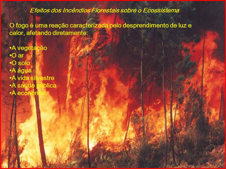 Efeitos dos Incêndios Florestais sobre o Ecossistema