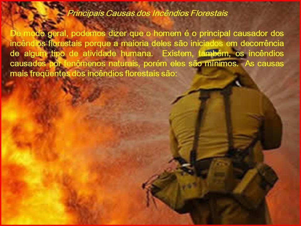 Principais Causas dos Incêndios Florestais