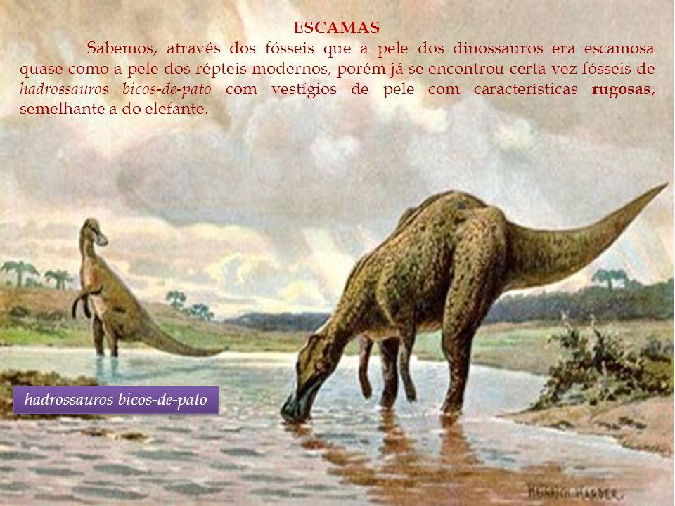 hadrossauros bicos-de-pato