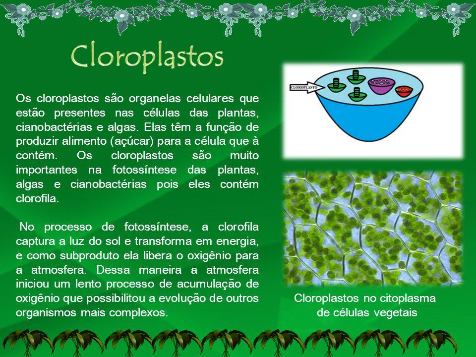 Cloroplastos no citoplasma de células vegetais