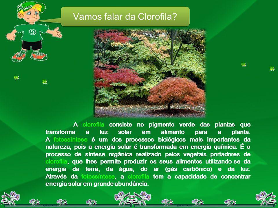 Vamos falar da Clorofila